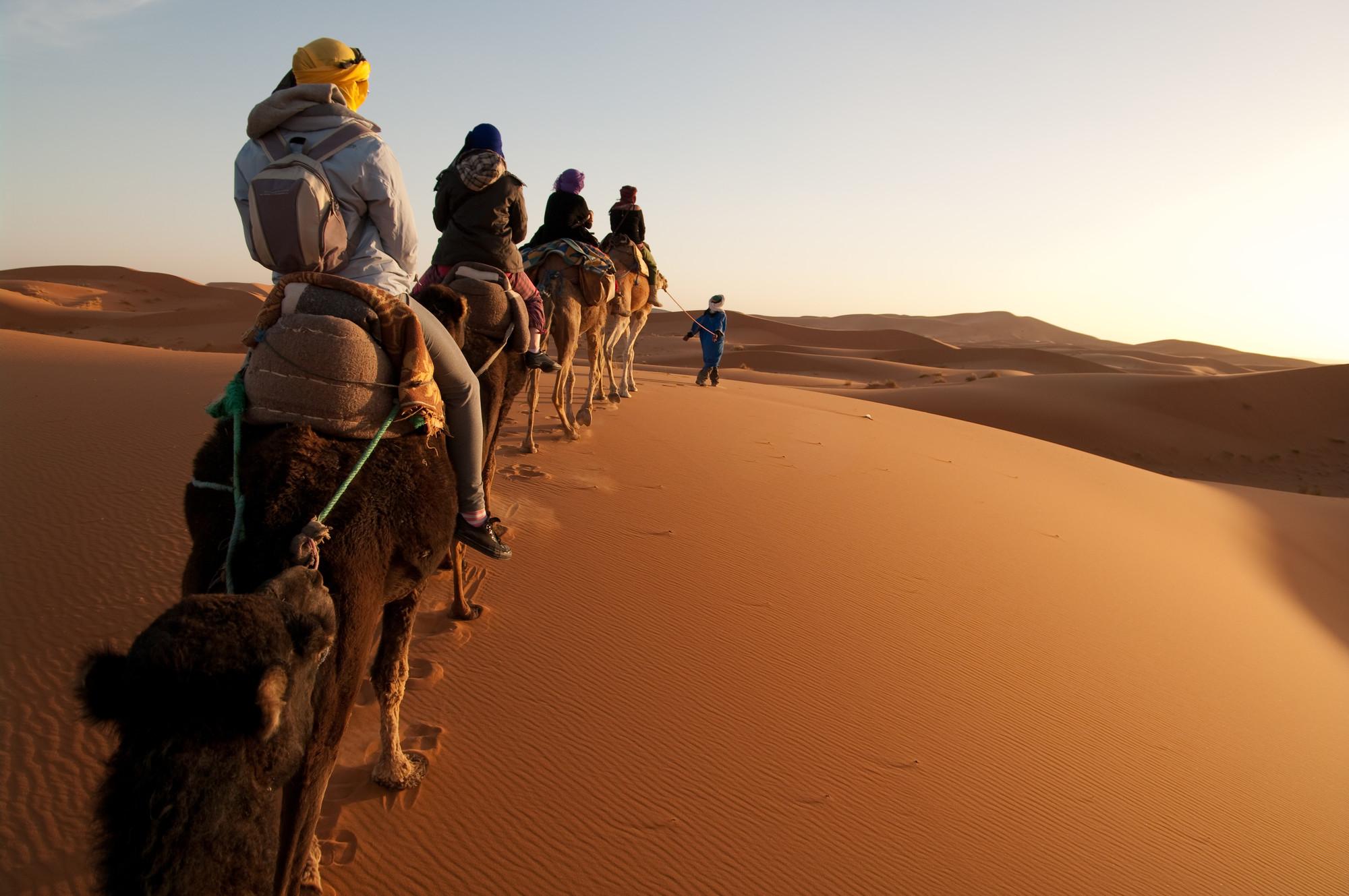 Marocko Öken kameler