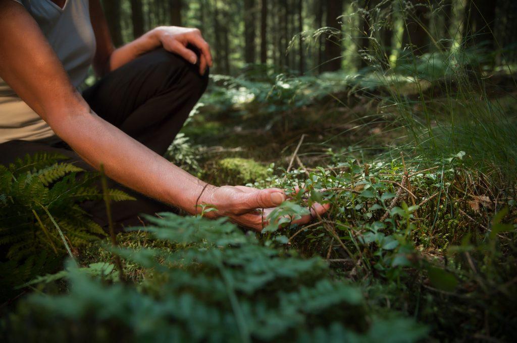 Kvinna skogsbadar med alla sinnen och smakar på örter i skogen. Solen skiner genom löven.
